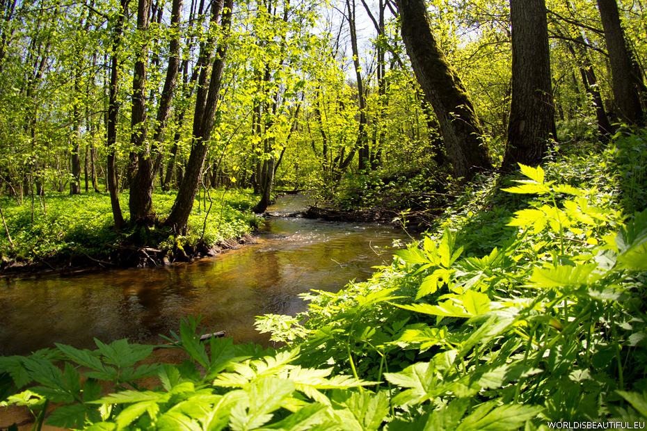 Rzeka i las