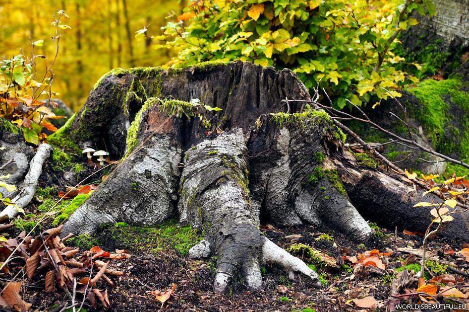 Niesamowite kształty natury