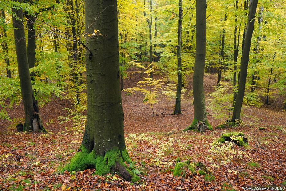 Las bukowy, Piekło Górne