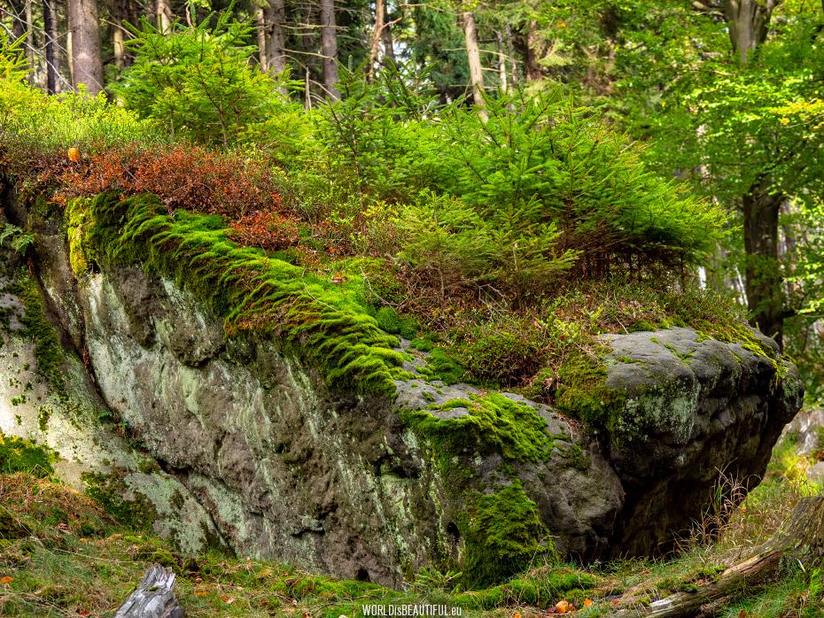 Ścieżka przyrodnicza