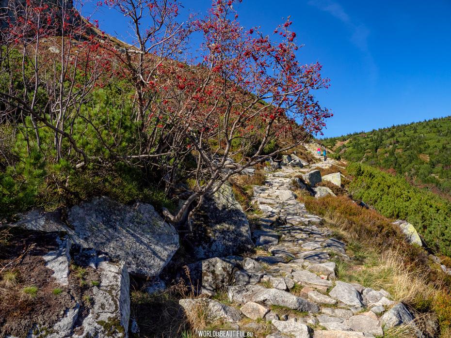 Red trail to Sniezka
