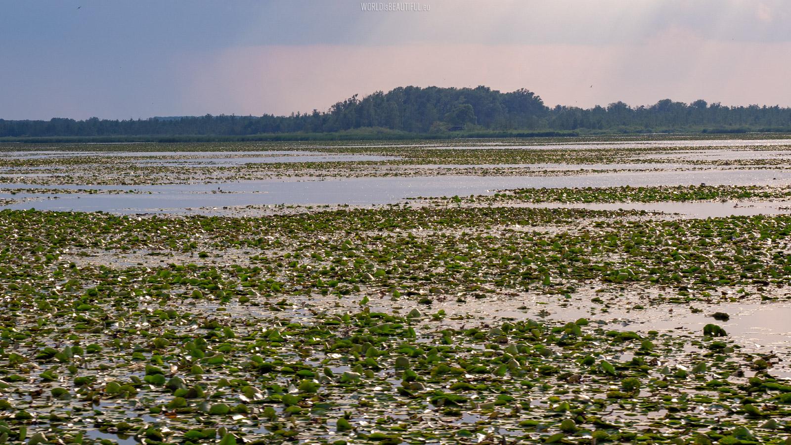 Druzno Lake Nature Reserve