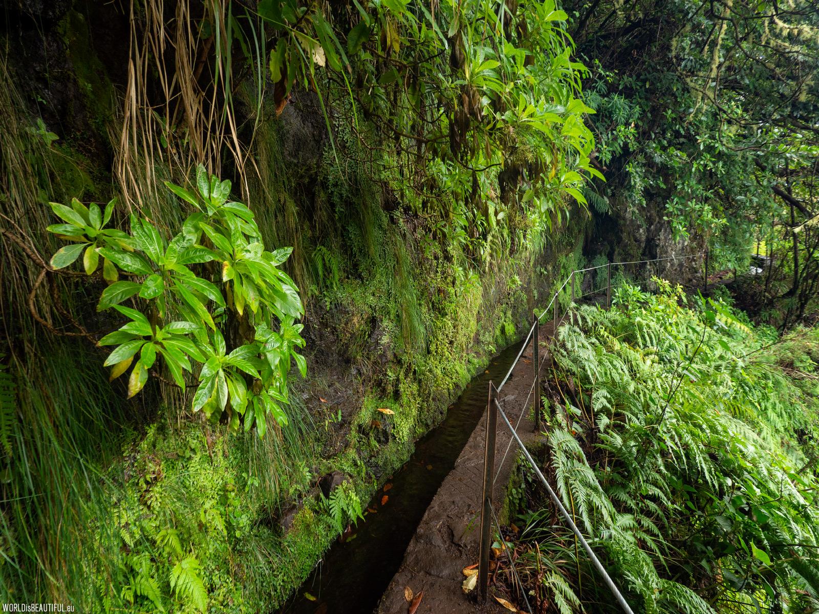 Madeira hiking trails