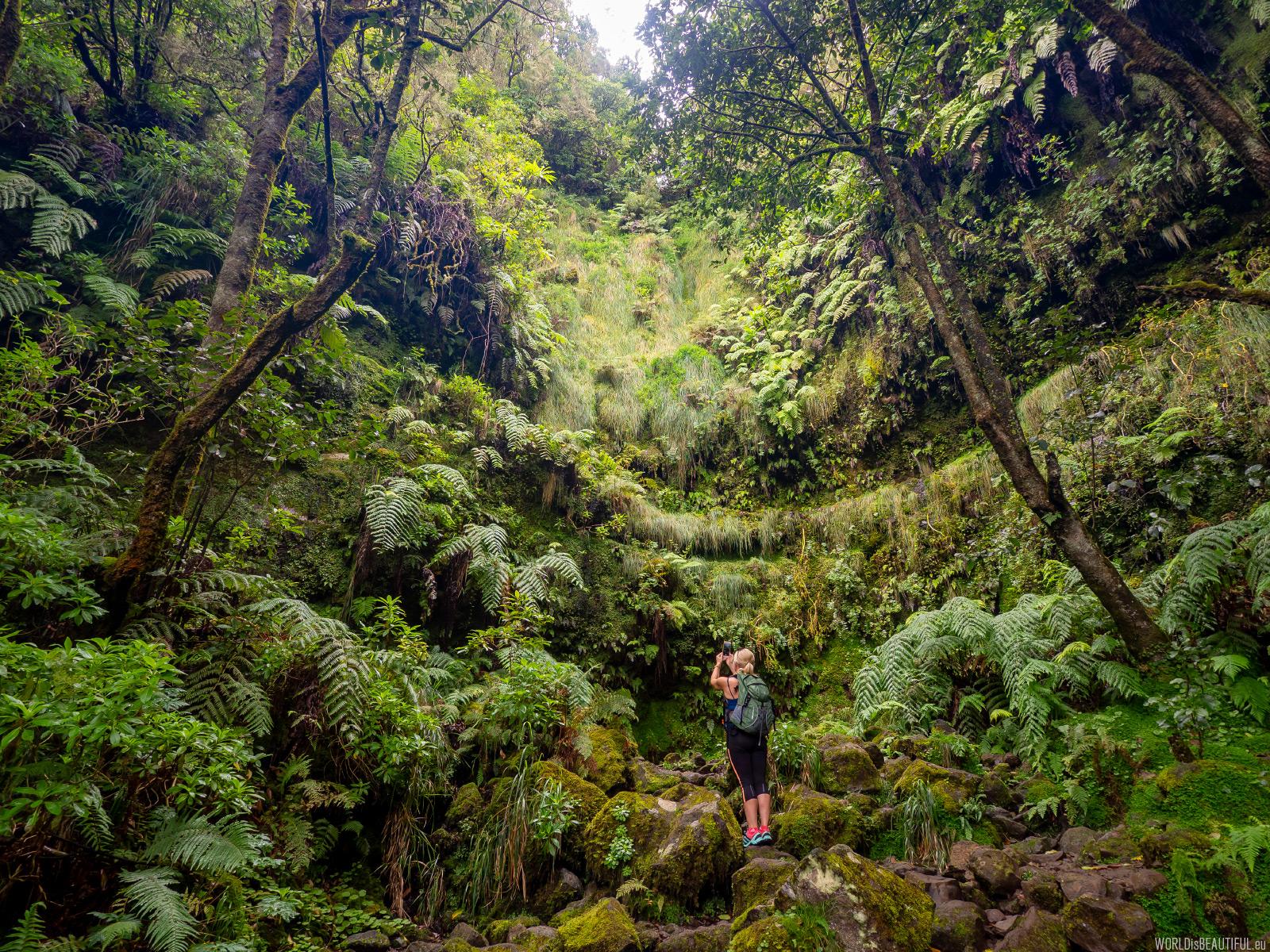 Prawie jak w dżungli