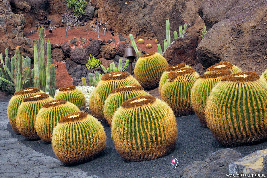 Garden on Lanzarote, Jardin de Cactus