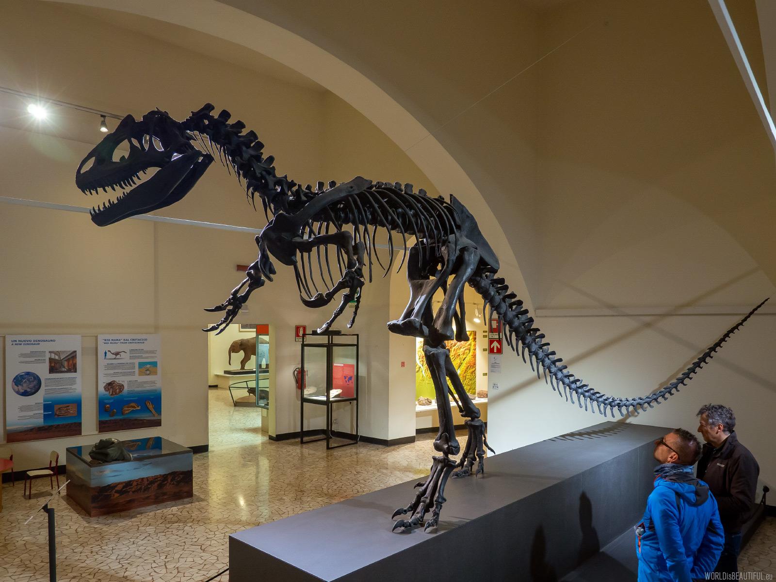 Museo di scienze naturali Bergamo