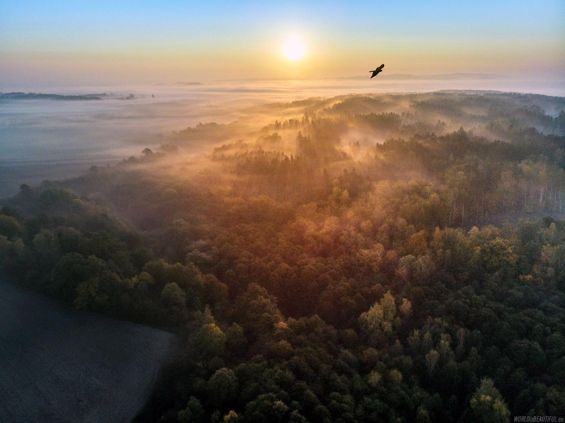 Czy ptaki atakują drony