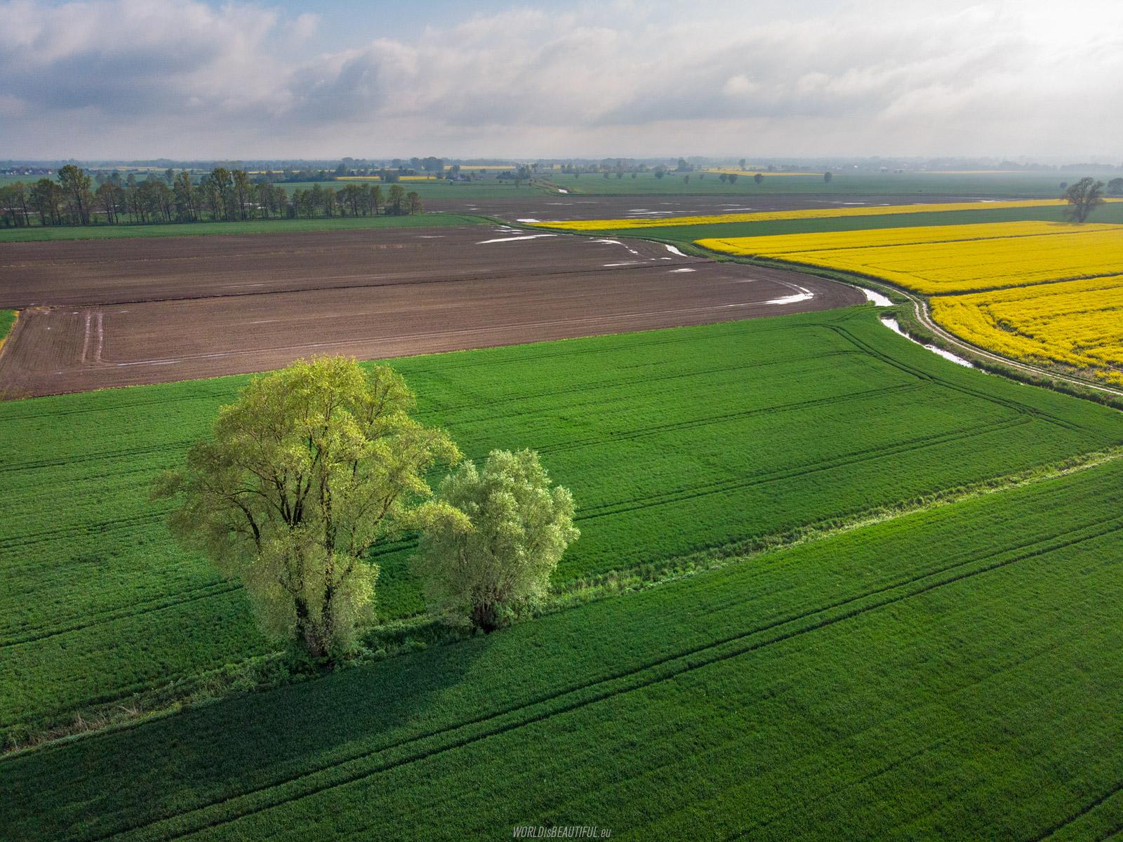 Fields in Żuławy
