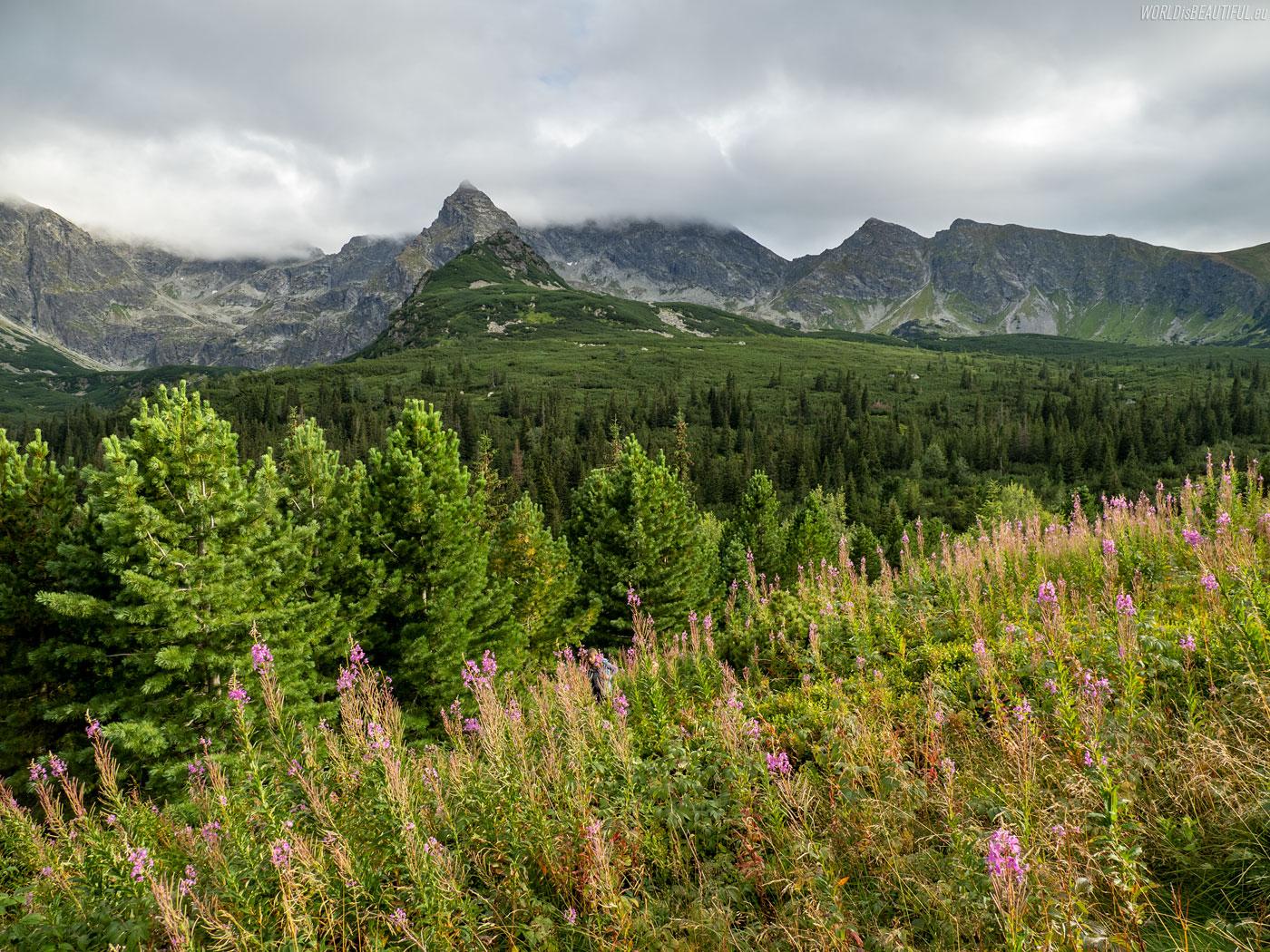 Zejście żółtym szlakiem do Doliny Gąsienicowej