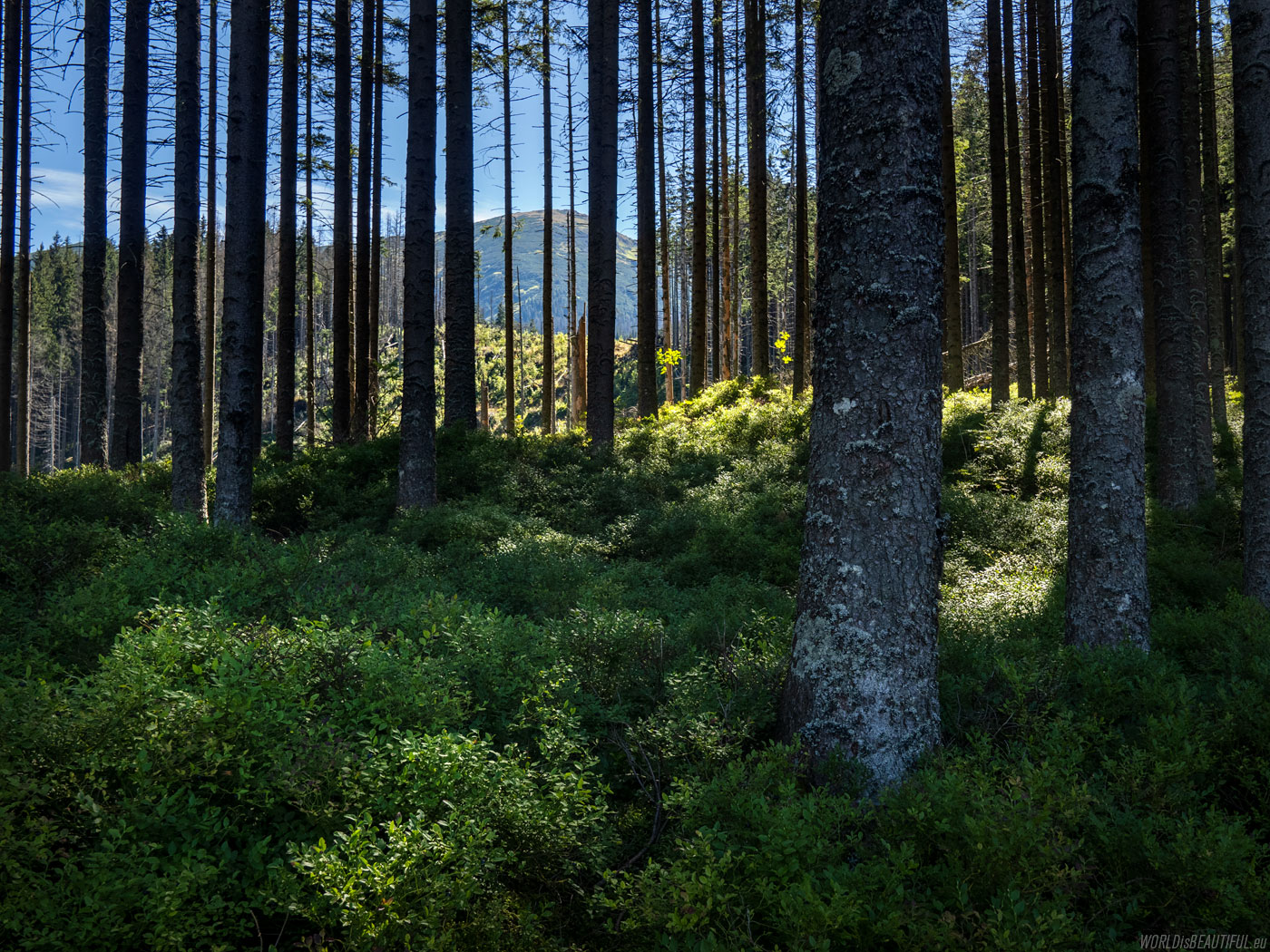 The green trail to Kasprowy Wierch