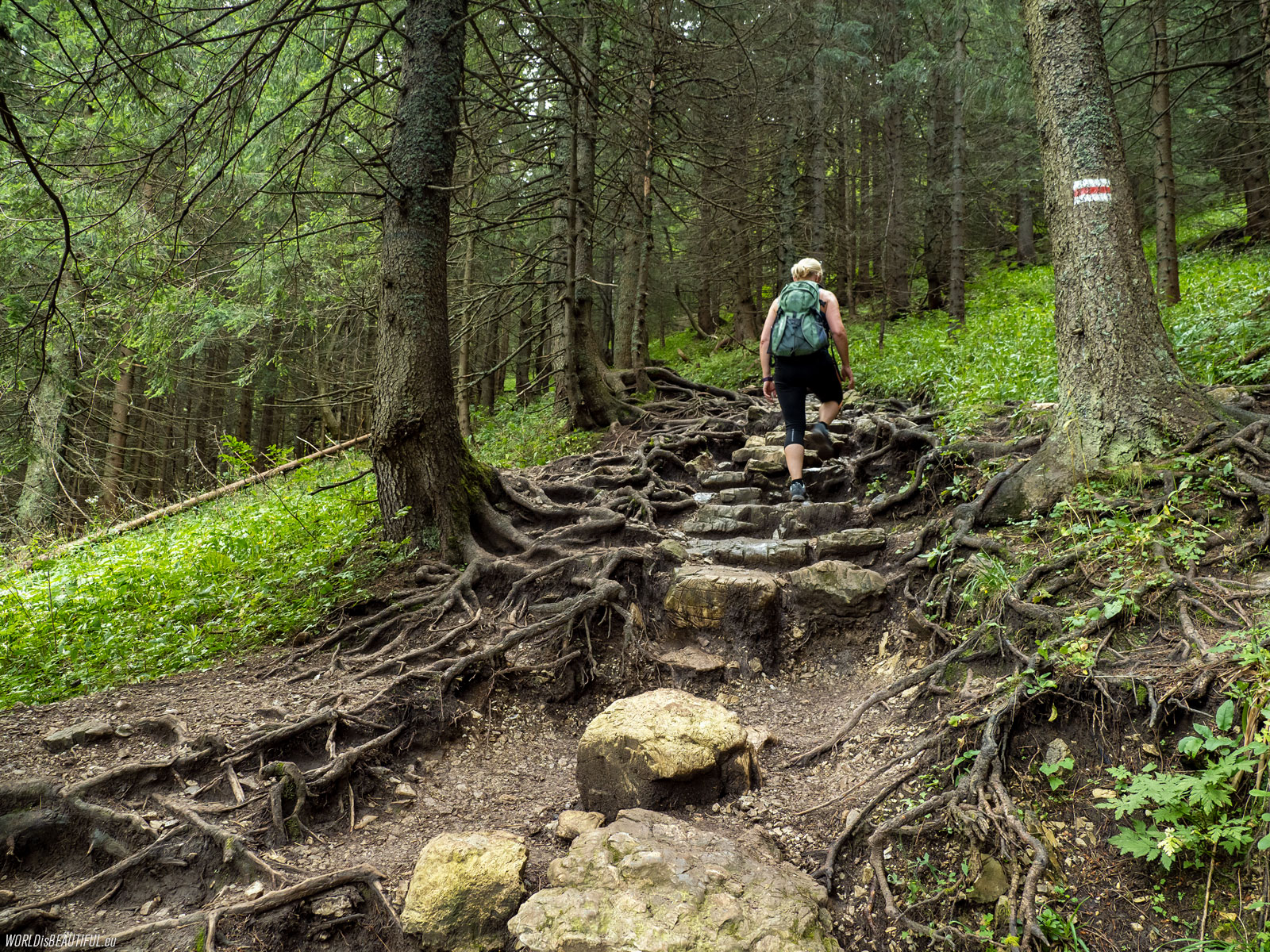 The red hiking trail to Giewont