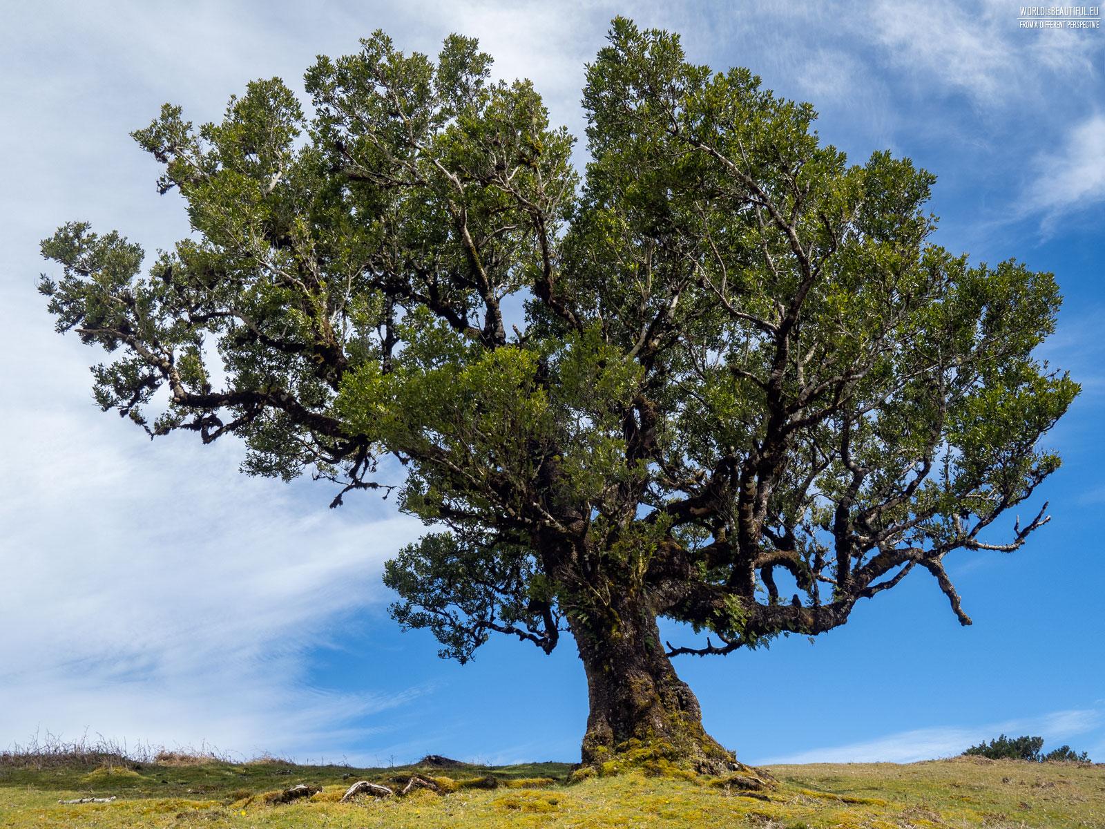 Zdjęcia drzew