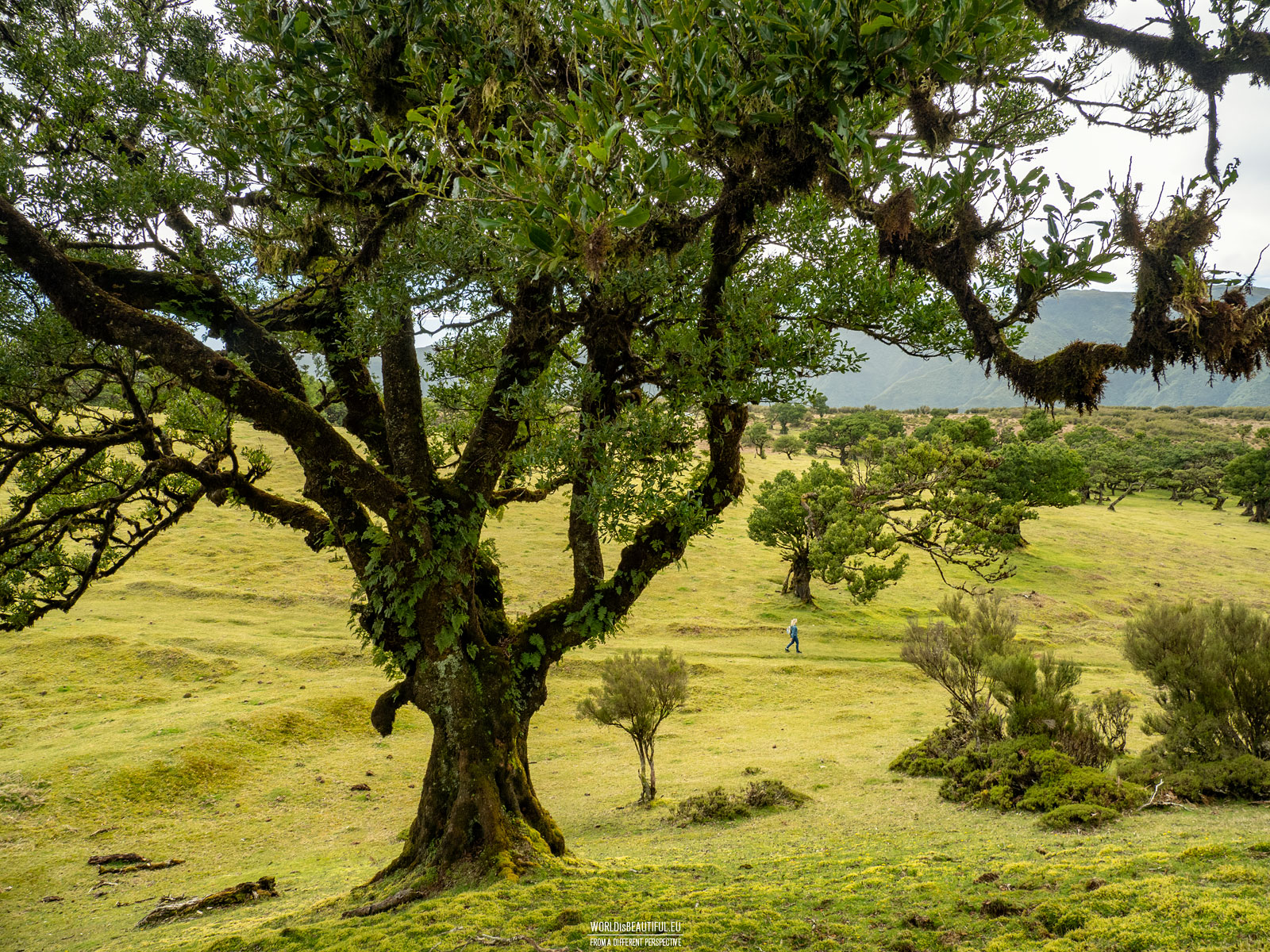 Walk in the Fanal Forest
