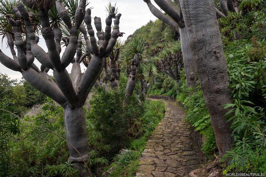 Ogród Botaniczny, Gran Canaria