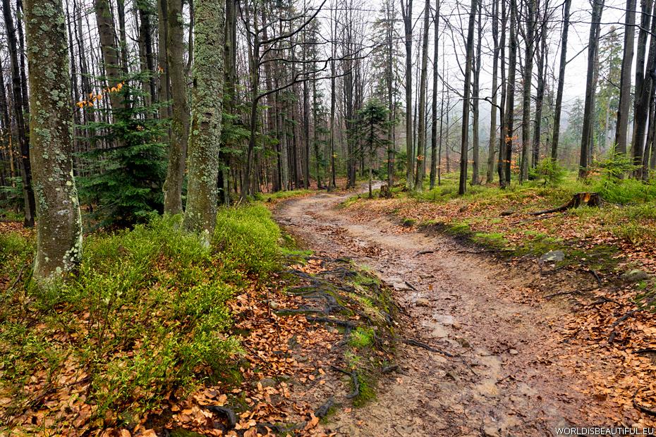 Trail to Jaworzyna Krynicka