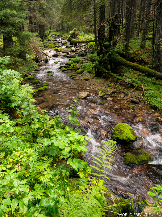 Stream in the mountains, Tatras
