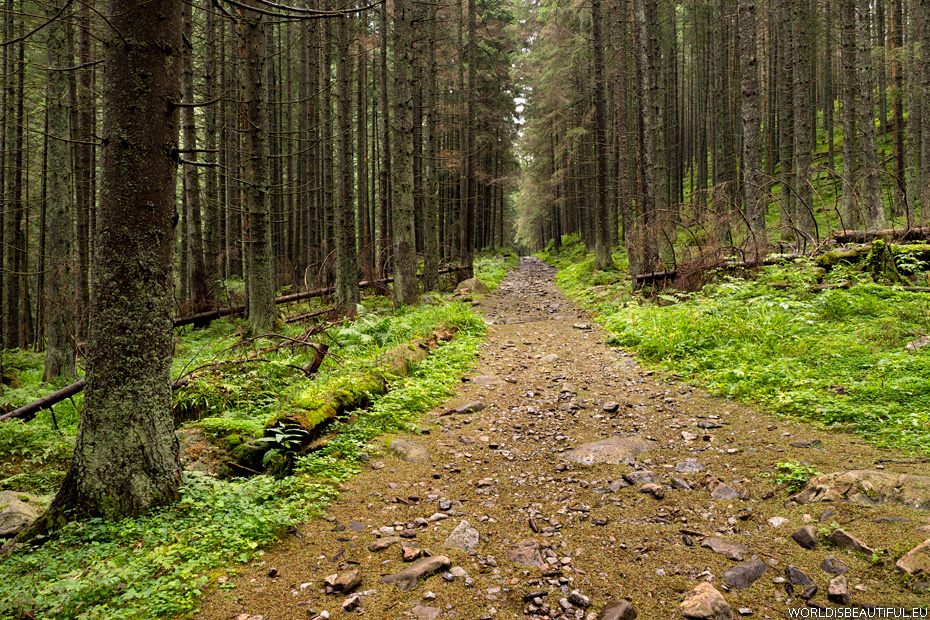 Trail in the mountains, Western Tatras