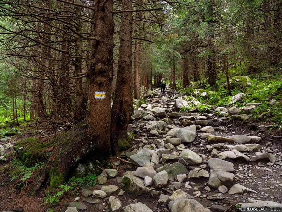 Trail in the mountains on the Kondracka Kopa