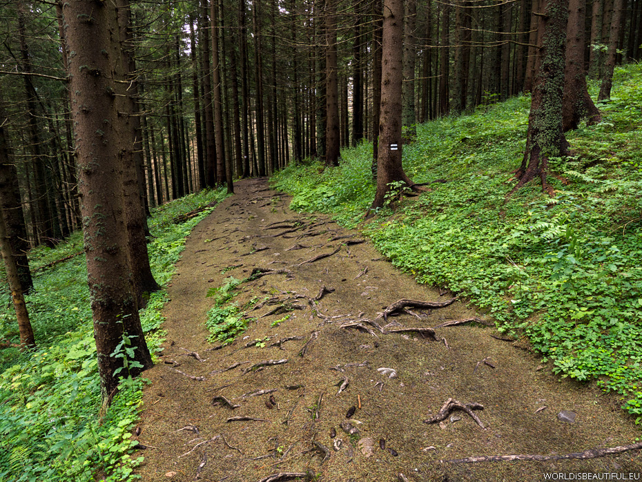 Hiking trail: Ścieżka nad Reglami