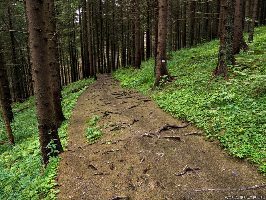 Ścieżka nad Reglami