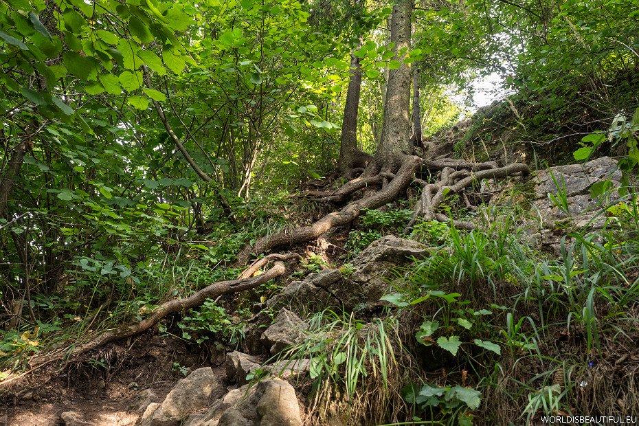 The trail to the top, Szafranówka