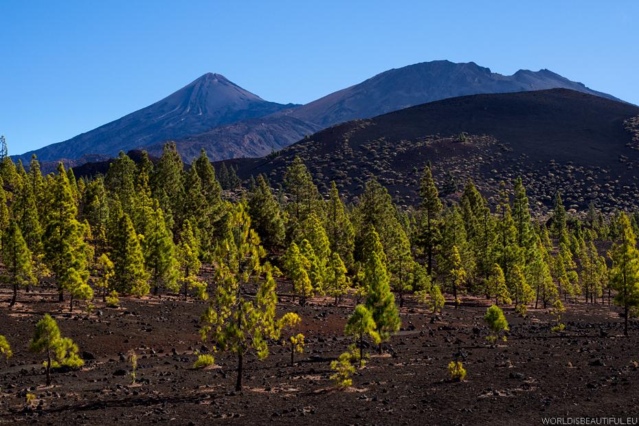 Landscapes of Tenerife