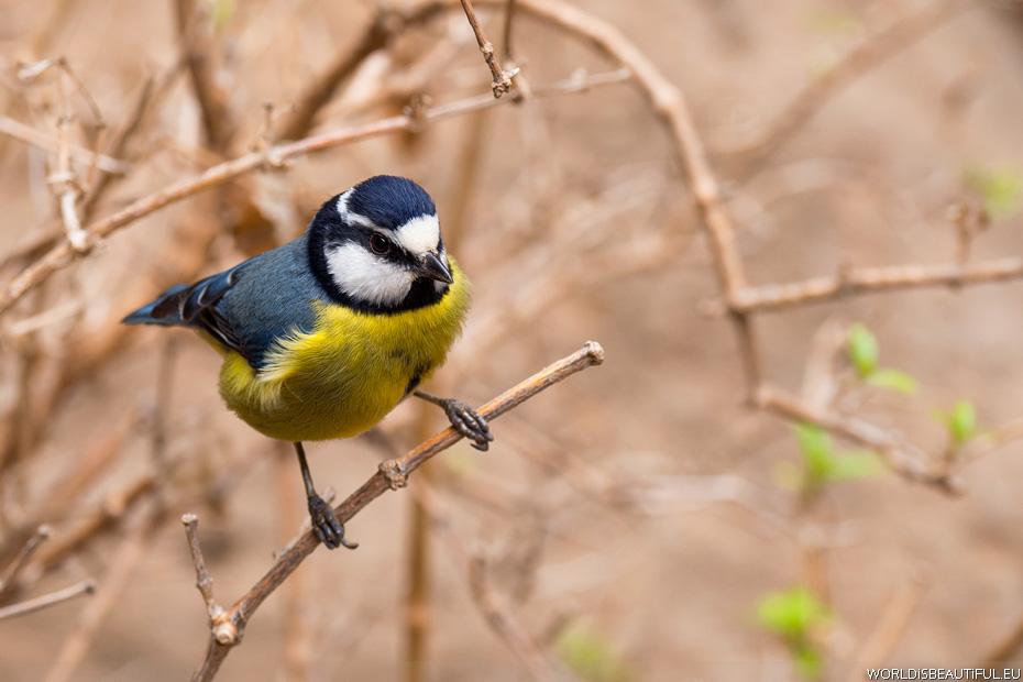 Ptaki na Wyspach Kanaryjskich