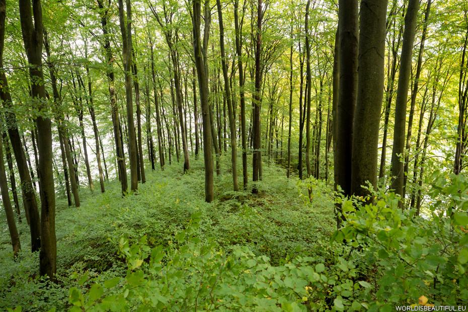 Las bukowy na półwyspie