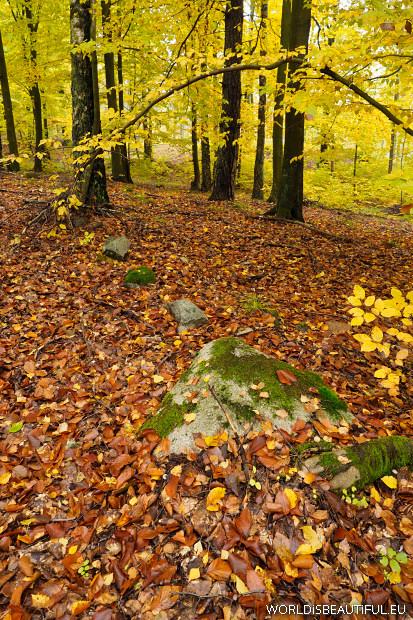 Kamienne wieńce w lesie