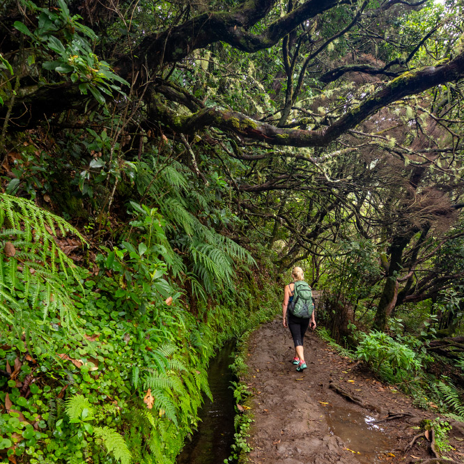 Levada Walks in Madeira