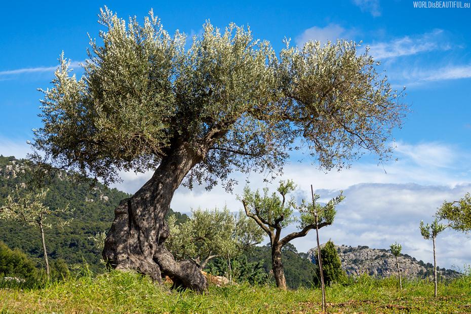 A trekking trail to Deia