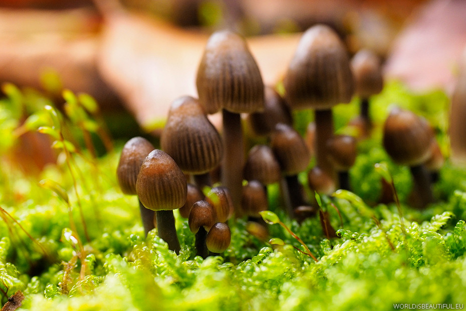 Macro photography - small mushrooms