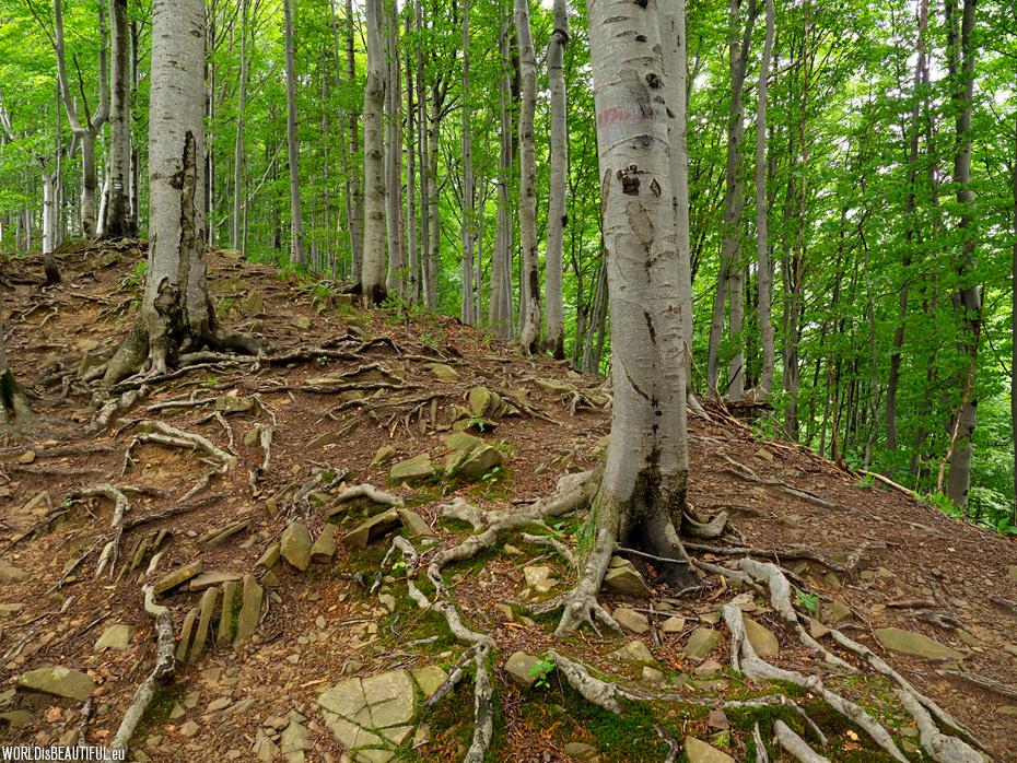 Blue trail to Wielka Rawka