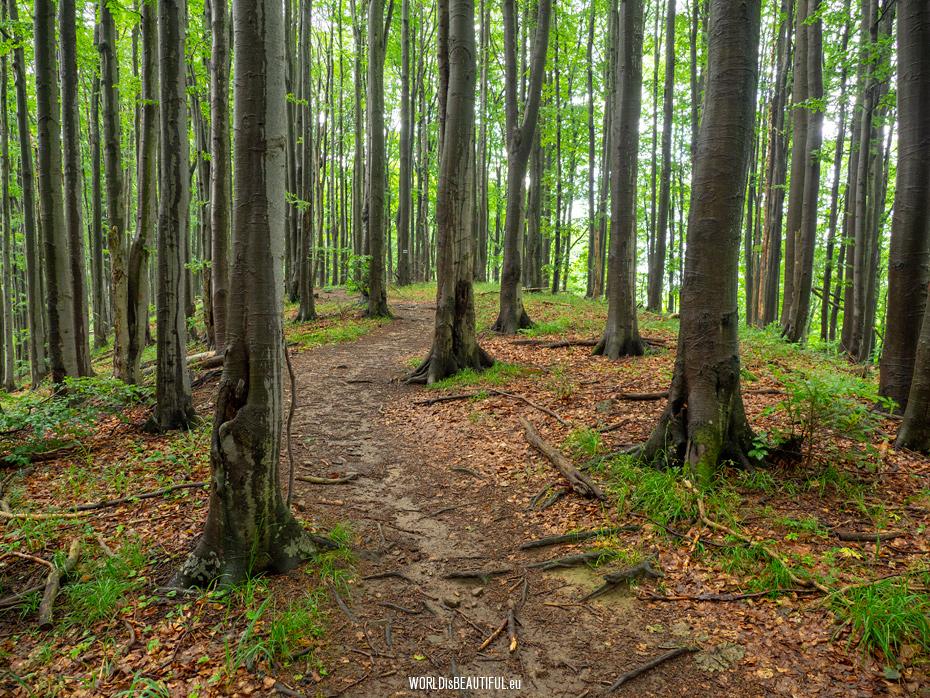 Ścieżka przyrodnicza Bukowe Berdo