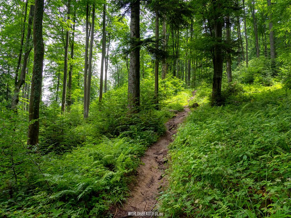 Trekking trails in Bieszczady