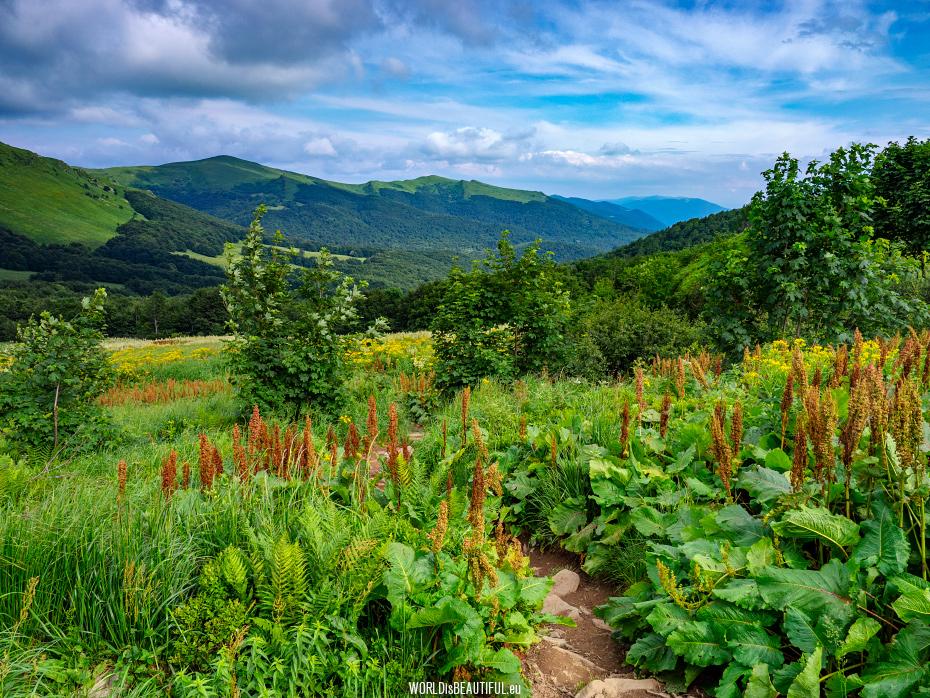 Przełęcz Goprowska i bieszczadzkie krajobrazy