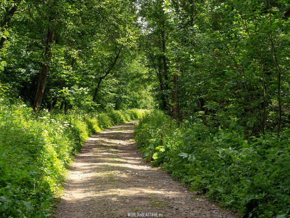 Tourist trail to Przelecz Bukowska
